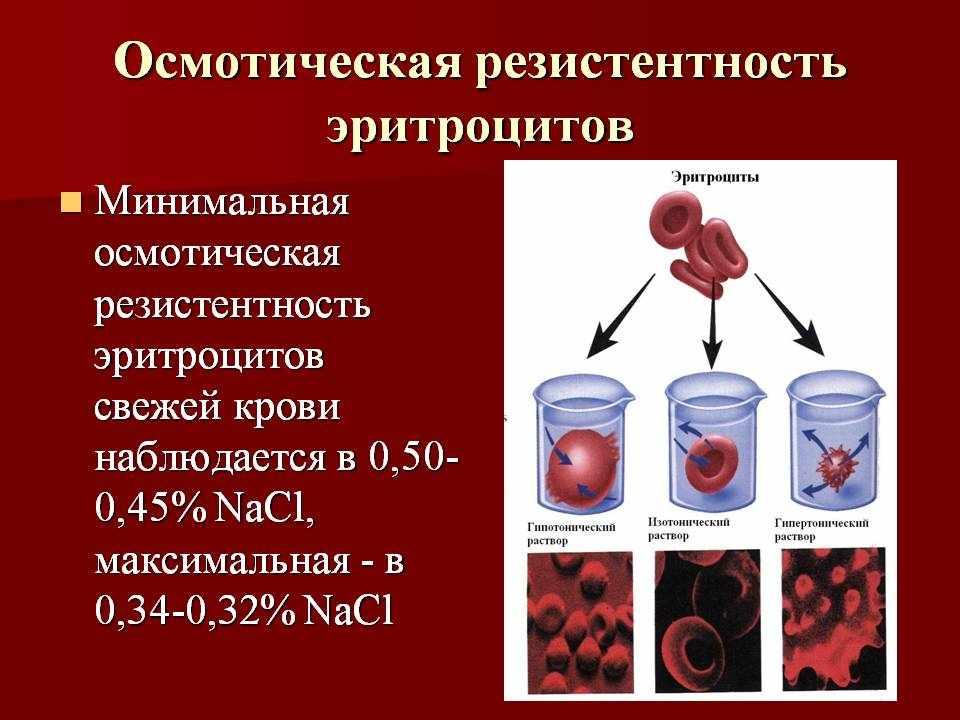 резистентность эритроцитов