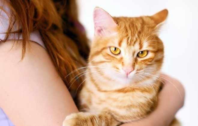 Рыжий кот на руках